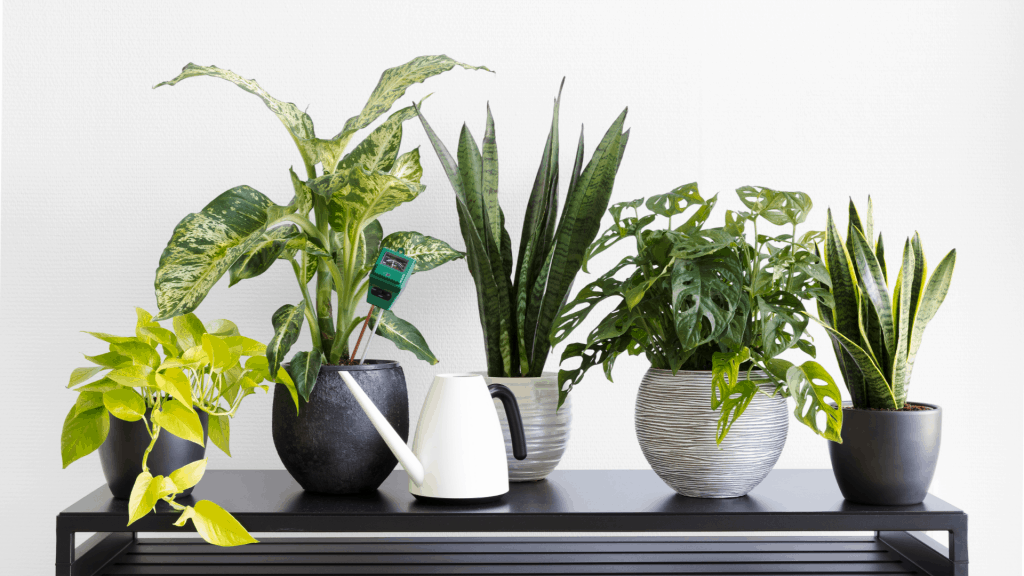 house plants in a row on white background